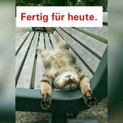 """Résultat de recherche d'images pour """"fertig fur heute lustige bilder"""""""