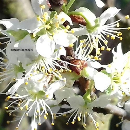...soleil et fleurs...