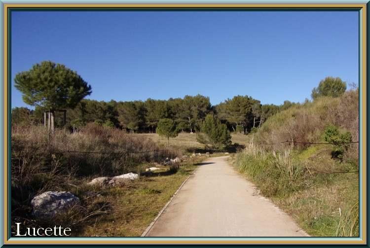 Promenade dans le bois des Semboules