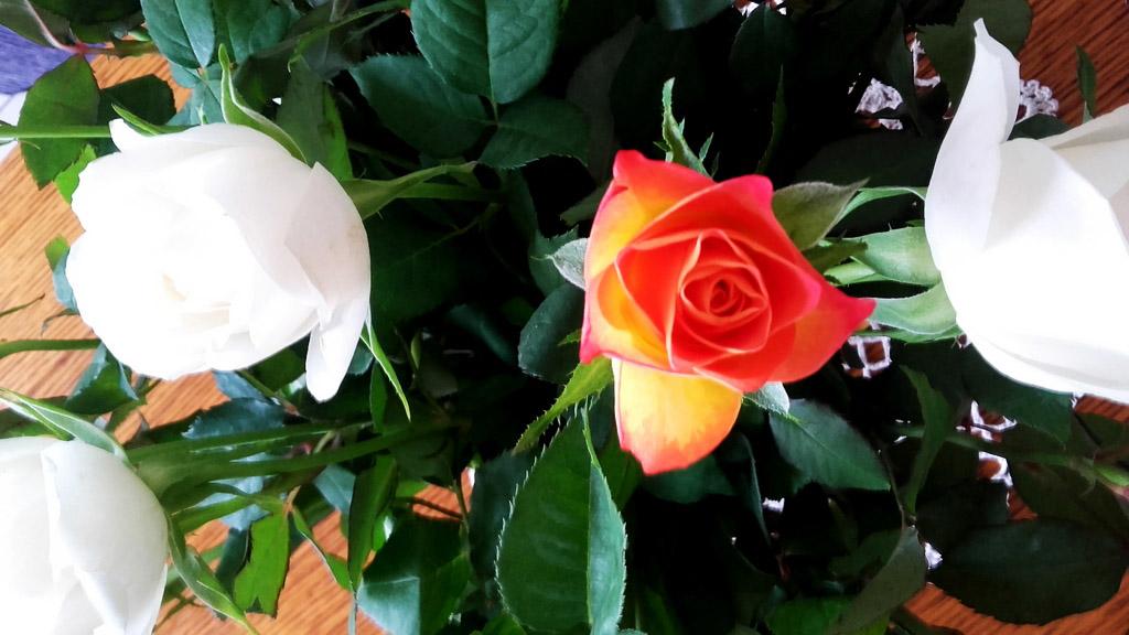 Adieu Béthune...Adieu mon magnifique jardin!