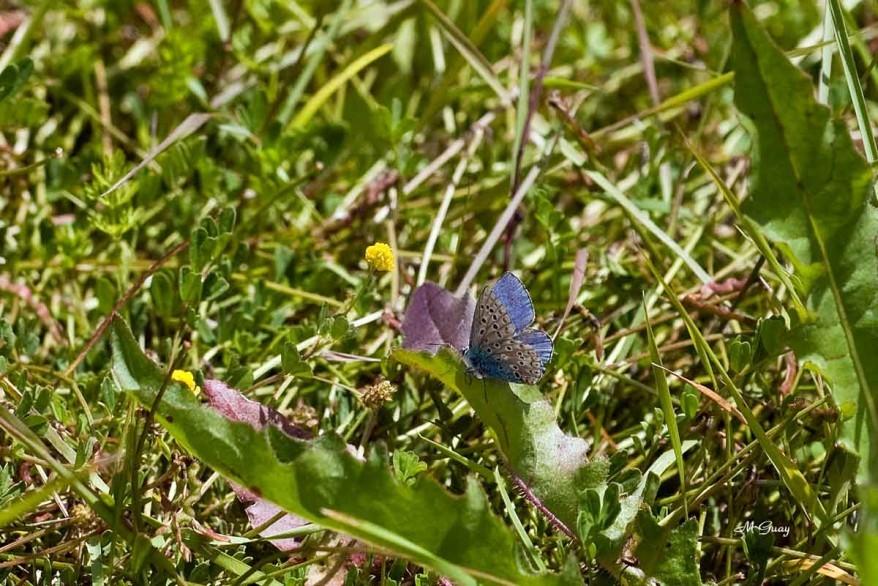9800-rec-papillon-bel-argus.jpg