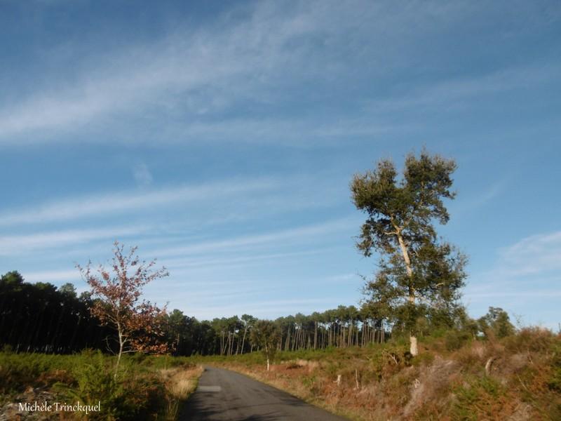 Une balade à l'Etang du Paludot à LEON (40), le 18 décembre (suite n° 2 et fin)...