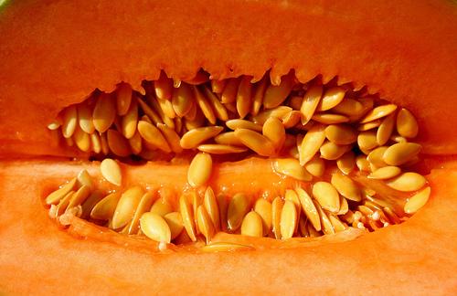 CC : robpatrick faux melon charentais produit des charentes france