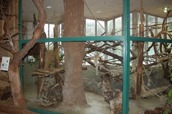 Zoo Osnabruck d50 2012 265