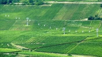 174-Telesiège dans les vignes