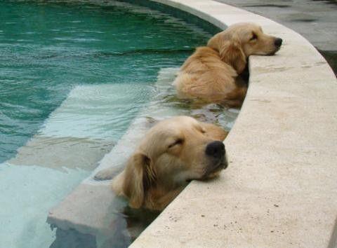 chien-eau.jpg