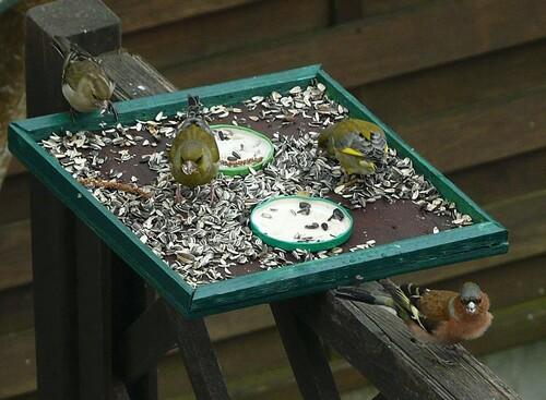 plate-forme de nourrissage pour oiseaux