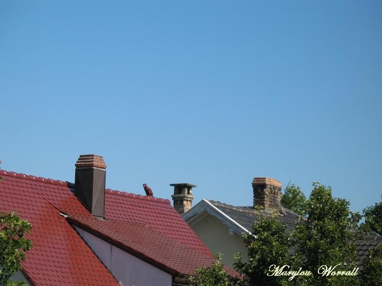 Ciel d'Alsace 227