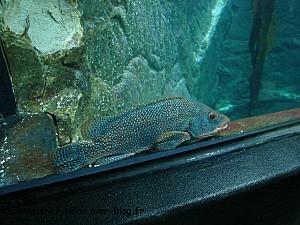 poisson rangé02
