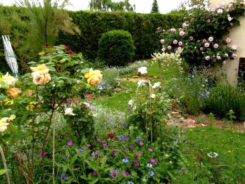 Mon jardin avant la pluie qui prend de plus en plus des airs de roseraie !
