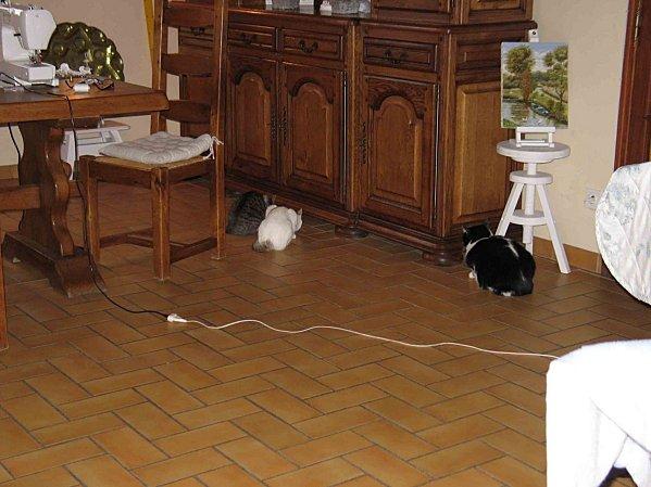 Chats-devant-le-meuble-005-bis.jpg