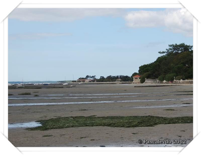 Le sentier du littoral entre Lanton et Taussat - 6/10