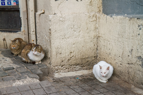 09 - Des chats dans les rues, en couleurs