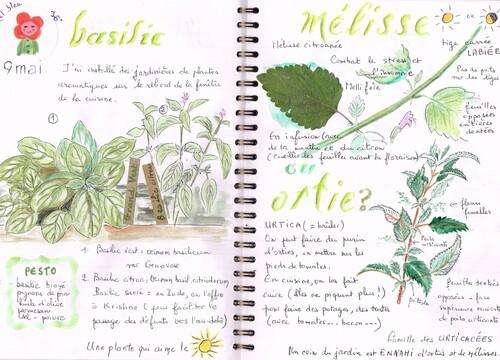 carnet de jardin, la menthe, la mélisse et l'ortie