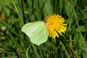 Le printemps des papillons