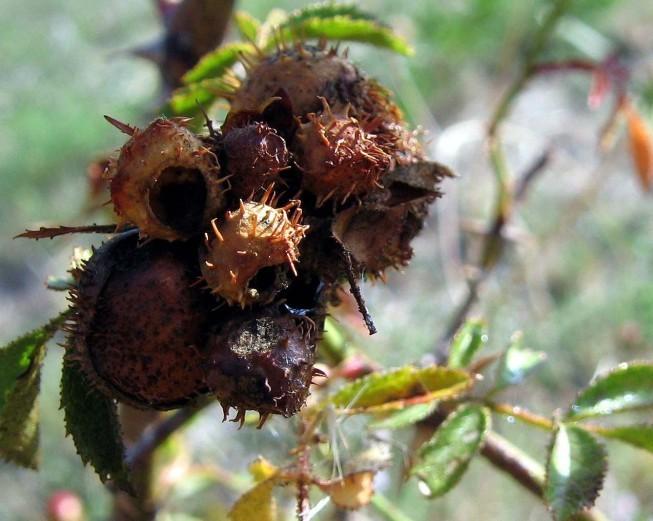 Fruits inconnus 7580