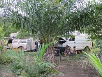 Bénin Bivouac sous les palmiers