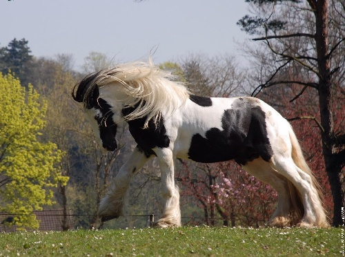 Cheval.