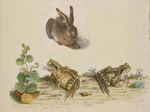 Illustration: Le lièvre et les grenouilles