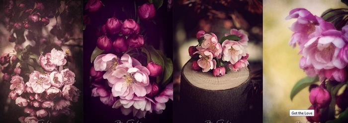 Pommier Japonais ou Malus Floribunda