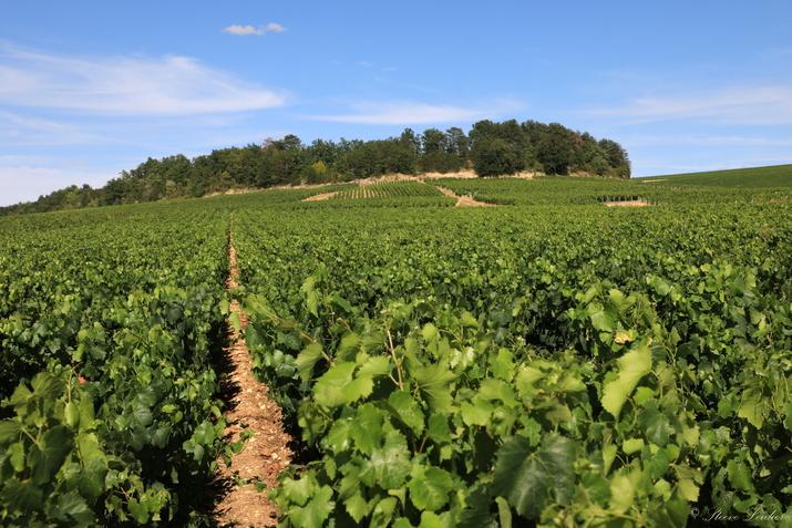 Le Vignoble de Chablis