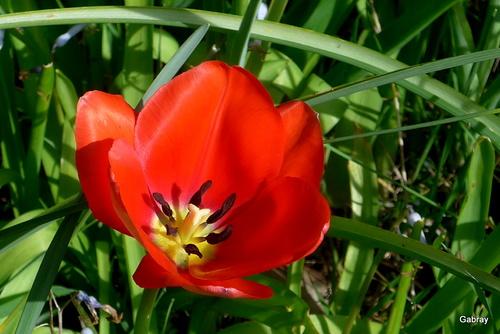 C'est du rouge tulipe !