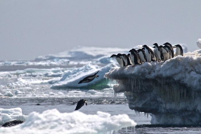 Multiplication Inquiétante De Records De Chaleur En Antarctique