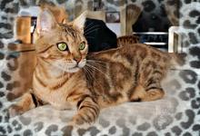 Gladys8295753-bw-leopard-peau-arriere-plan-ou-la-texture-grande-resolution