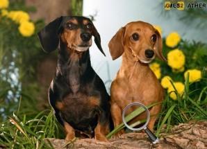 Hidden numbers - Puppies