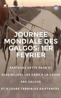 1er Février Journée mondiale des Galgos