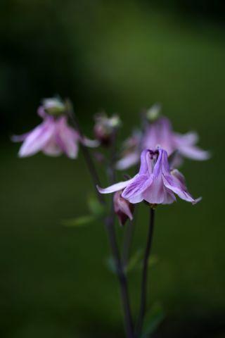 Le jardin comme exutoire (7)