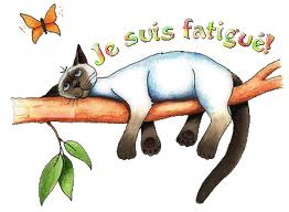 chat-qui-dort.jpg