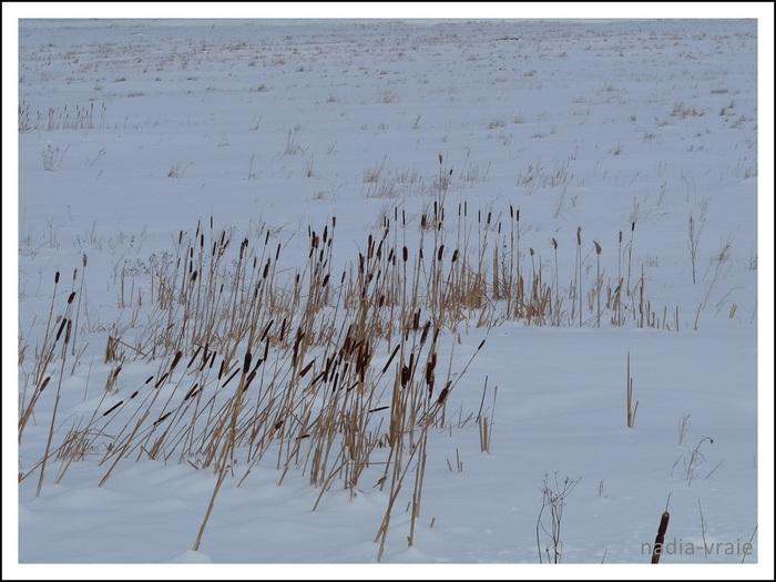 Photo de la semaine, paysages d'hiver. (Communauté d'Amartia)