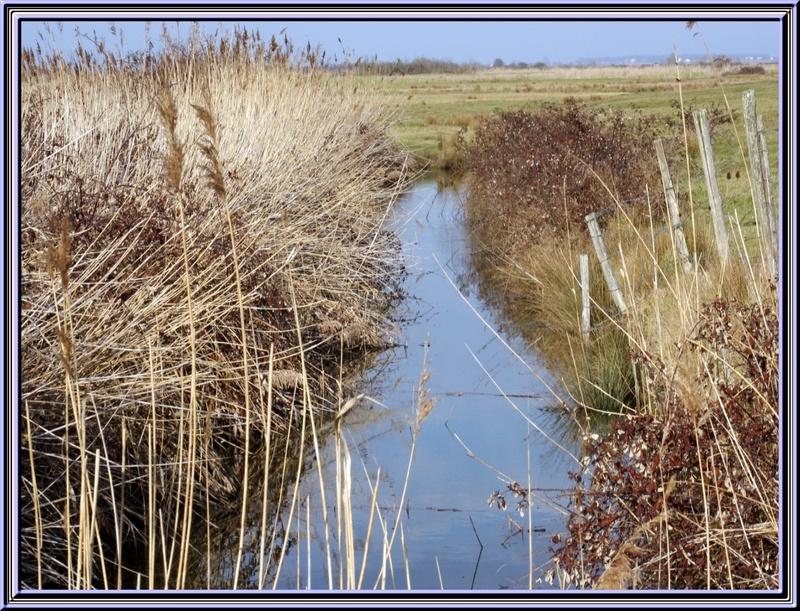 Balades dans les marais à St Just Luzac (17)
