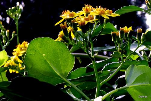 Mes petites fleurs jaunes
