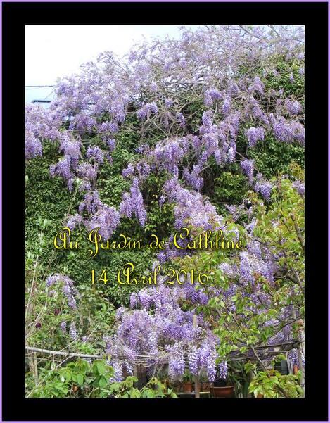 Bleu, mauve, violet  au jardin