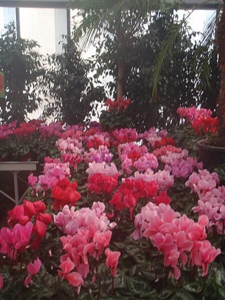 fleurs d automne 005