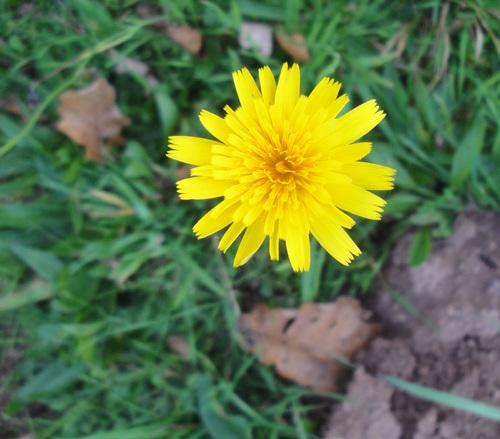Fleurs d'automne dans le pré
