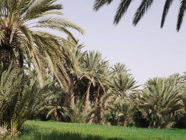 Toujours dans la palmeraie... masi un autre endroit...