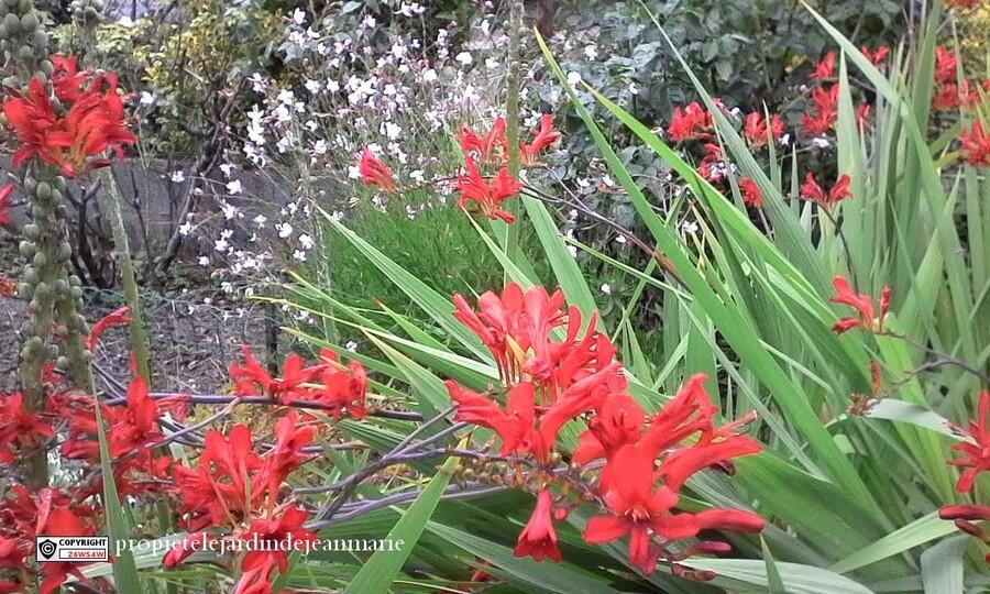 des travaux dans mon jardin ,voici quelques photos pour vous donnez une idée