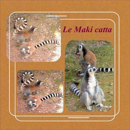 Maki_catta