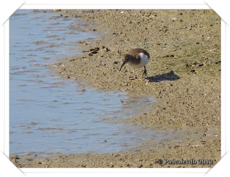 Visite aux oiseaux du Teich - 10/12