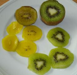 Kiwi de l'Adour - Kiwi Gold