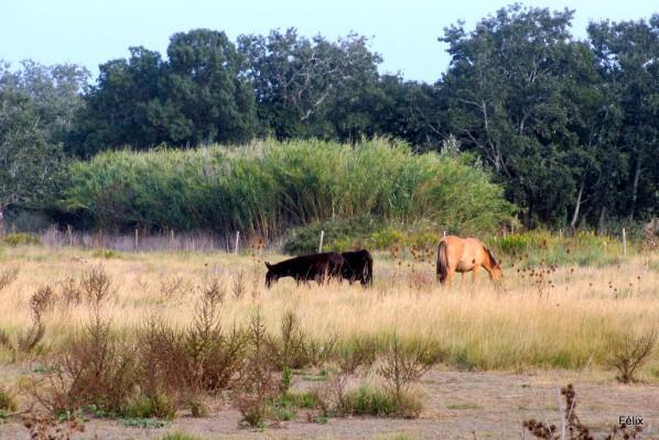 s01---Les-chevaux.JPG