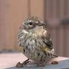 Oiseau bébé