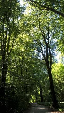 Reichswald in Kleve
