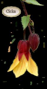 Virágok.1.