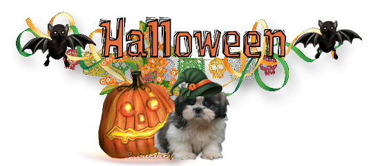 halloween  c 'est bientôt