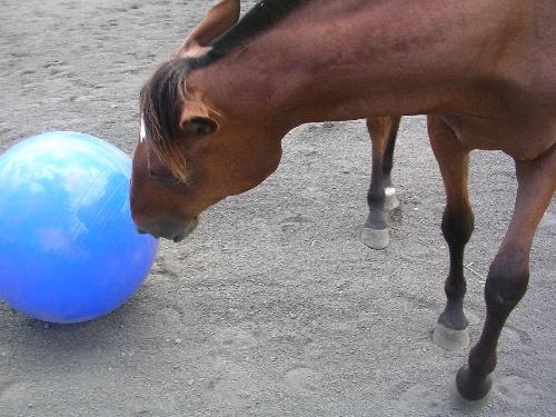 shadé joue au ballon