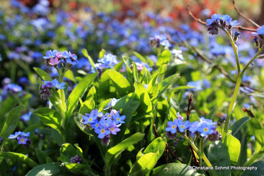 printemps d'autrefois